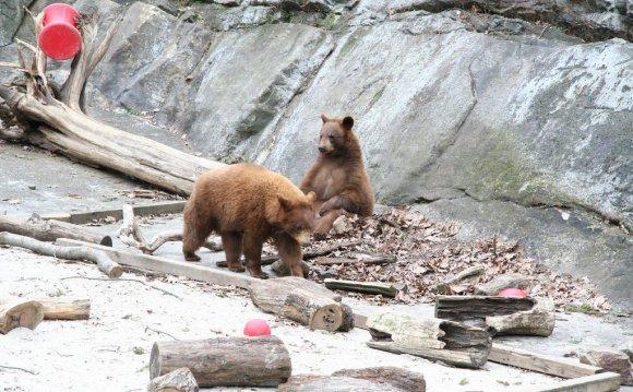 Bear Mountain State Park 10