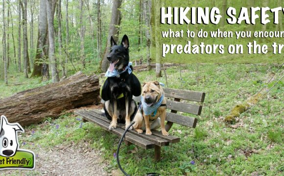 Pet Friendly Hiking Safety: