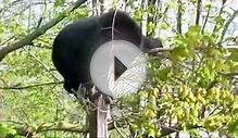 Black Bear vs. Clothesline in Black Mountain, NC May 7, 2013