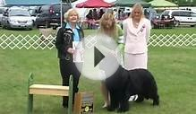 Newfoundland Dog Winners Regional Specialty Bear Mountain