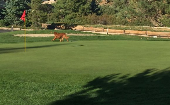 Big Bear Mountain Golf Course
